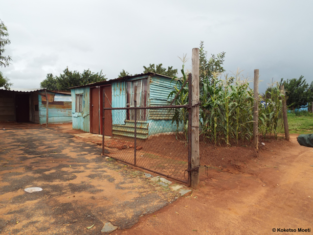 A number of Lindelani residents have taken to farming on their land.