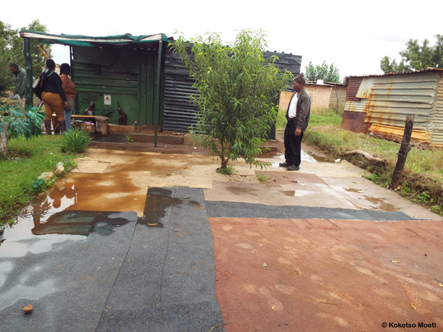 This resident resorted to carpeting his yard to somewhat reduce the flooded conditions.